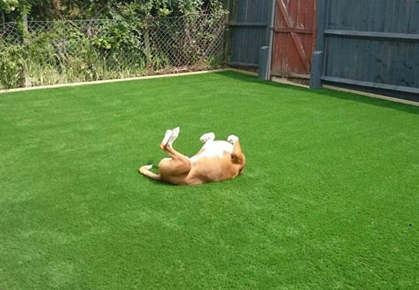 Is Artificial Grass Safe For Pets (2)